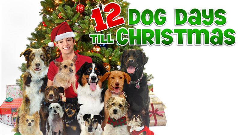 Dog Days Till Christmas Movies