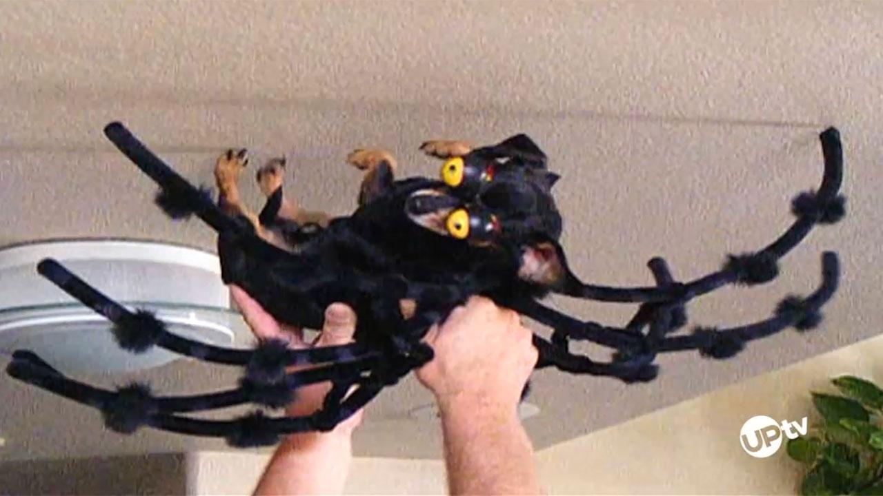 AFV - AFV – Dog-Gone Great Halloween Costumes